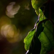 fotografias de natureza realizadas no santuario ecol[ogico de PIPA - RN